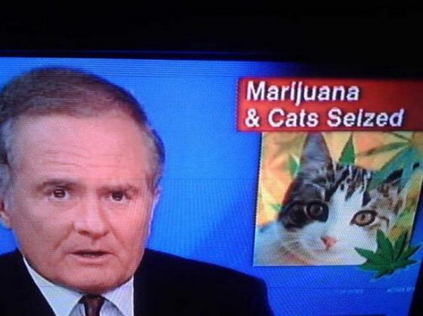 IMAGE(http://totalcatmove.files.wordpress.com/2011/06/marijuana-and-cats-seized.jpg)