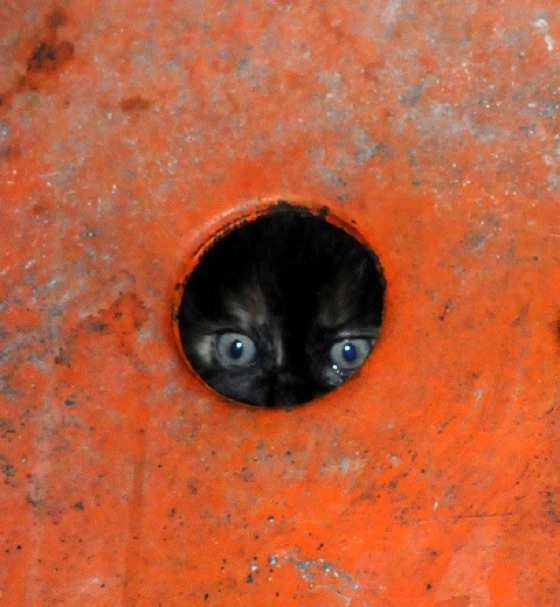 Grateful for glory hole cats what necessary
