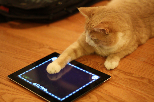 Cat-Playing-iPad