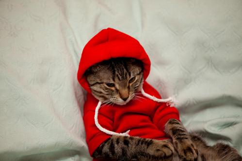 hoodie_cat